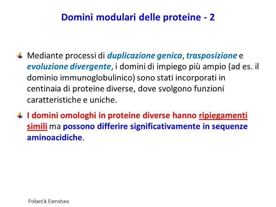 Domini modulari delle proteine - 2 Mediante processi di duplicazione genica, trasposizione e evoluzione divergente, i domini di impiego più ampio (ad