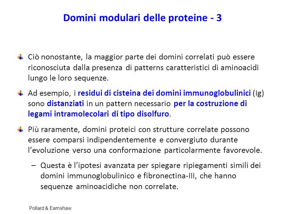 Domini modulari delle proteine - 3 Ciò nonostante, la maggior parte dei domini correlati può essere riconosciuta dalla presenza di patterns caratteris