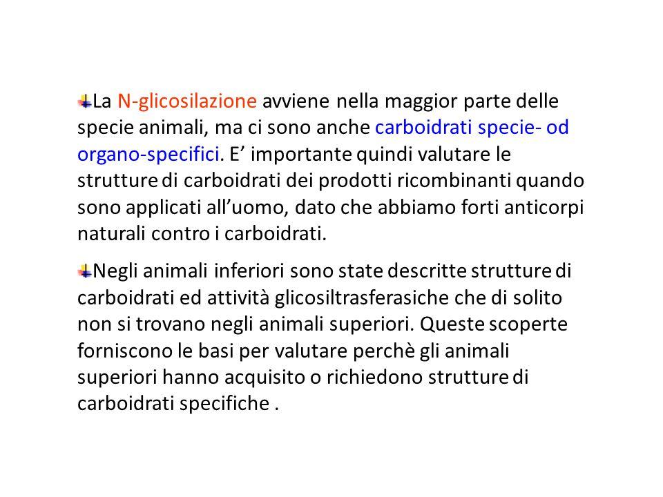 La N-glicosilazione avviene nella maggior parte delle specie animali, ma ci sono anche carboidrati specie- od organo-specifici. E' importante quindi v