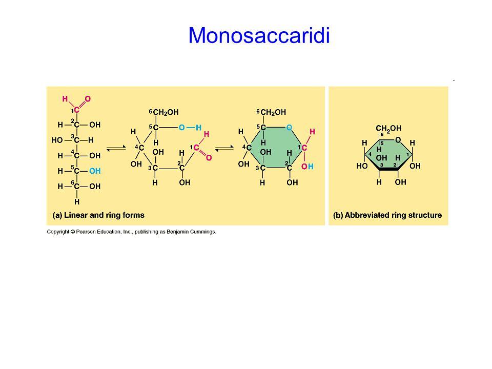 I proteoglicani consistono in una proteina assiale (marrone) e una o più catene di glicosaminoglicani legate covalentemente ([blu] HS; [giallo] CS/DS).proteoglicani I proteoglicani di membrana possono sia attraversare la membrana plasmatica (proteine di membrane di tipo I) sia essere legati ad ancore di GPI.