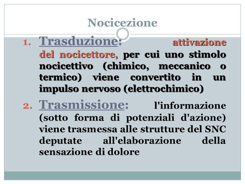 Nocicezione attivazione del nocicettore, per cui uno stimolo nocicettivo (chimico, meccanico o termico) viene convertito in un impulso nervoso (elettrochimico) 1.