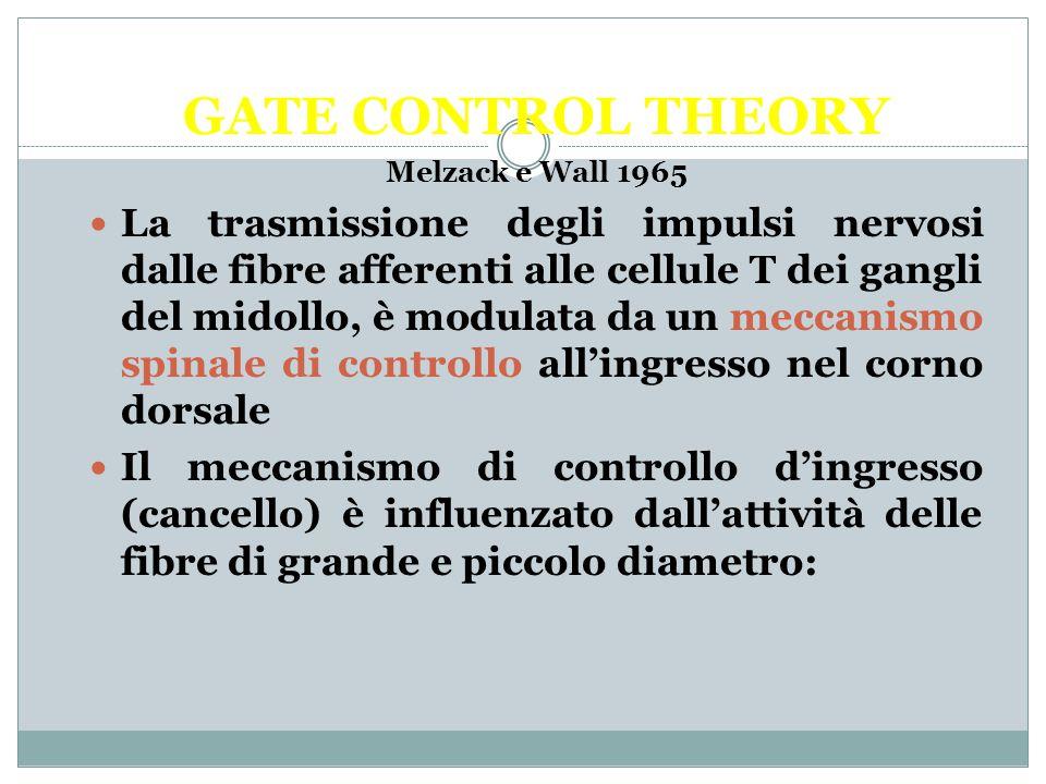 GATE CONTROL THEORY Melzack e Wall 1965 La trasmissione degli impulsi nervosi dalle fibre afferenti alle cellule T dei gangli del midollo, è modulata da un meccanismo spinale di controllo all'ingresso nel corno dorsale Il meccanismo di controllo d'ingresso (cancello) è influenzato dall'attività delle fibre di grande e piccolo diametro: