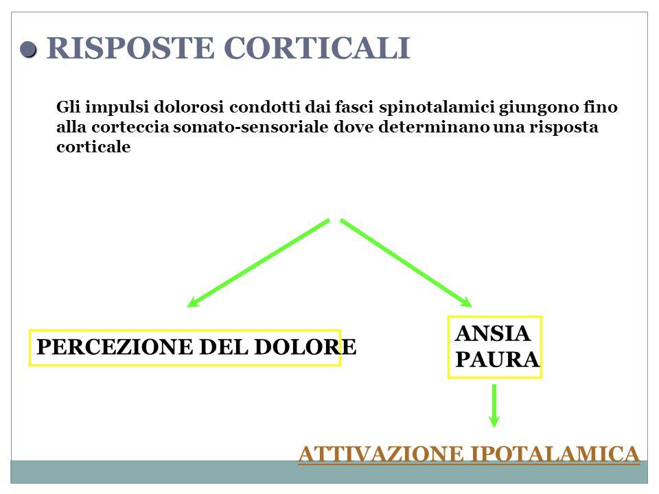Gli impulsi dolorosi condotti dai fasci spinotalamici giungono fino alla corteccia somato-sensoriale dove determinano una risposta corticale RISPOSTE CORTICALI PERCEZIONE DEL DOLORE ANSIA PAURA ATTIVAZIONE IPOTALAMICA