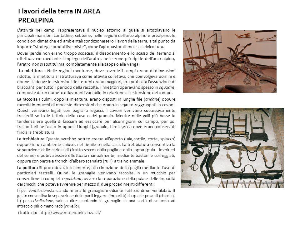 I lavori della terra IN AREA PREALPINA L'attività nei campi rappresentava il nucleo attorno al quale si articolavano le principali mansioni contadine,