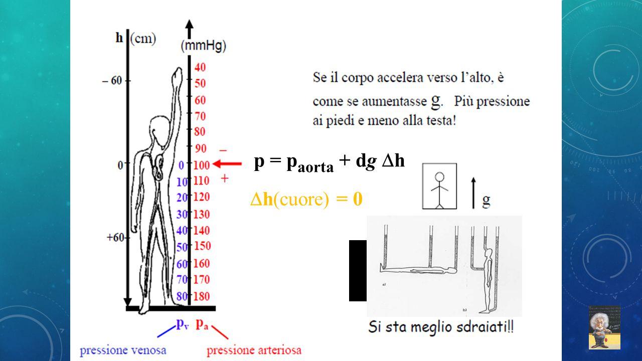 p = p aorta + dg  h  h(cuore) = 0