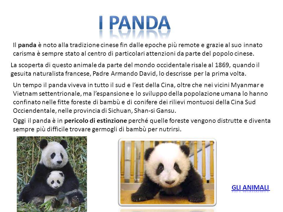 Il panda è noto alla tradizione cinese fin dalle epoche più remote e grazie al suo innato carisma è sempre stato al centro di particolari attenzioni d