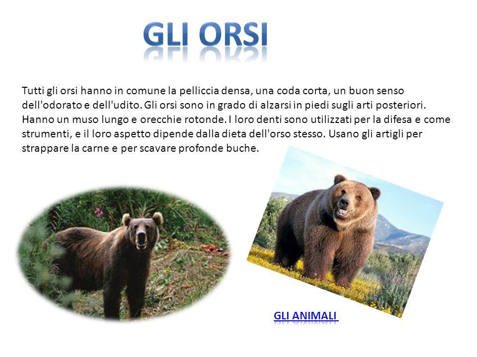 Tutti gli orsi hanno in comune la pelliccia densa, una coda corta, un buon senso dell'odorato e dell'udito. Gli orsi sono in grado di alzarsi in piedi