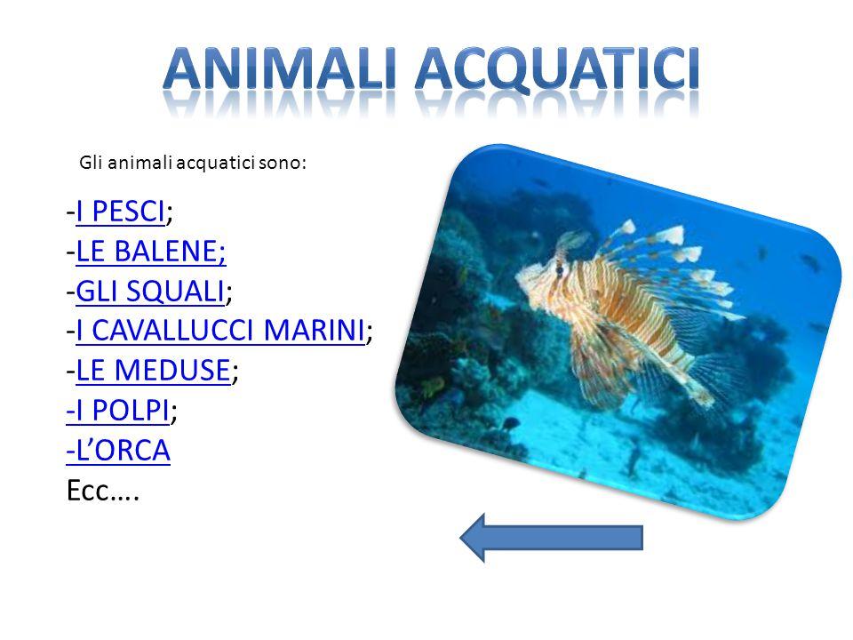 Gli animali acquatici sono: -I PESCI;I PESCI -LE BALENE;LE BALENE; -GLI SQUALI;GLI SQUALI -I CAVALLUCCI MARINI; -LE MEDUSE;I CAVALLUCCI MARINILE MEDUS