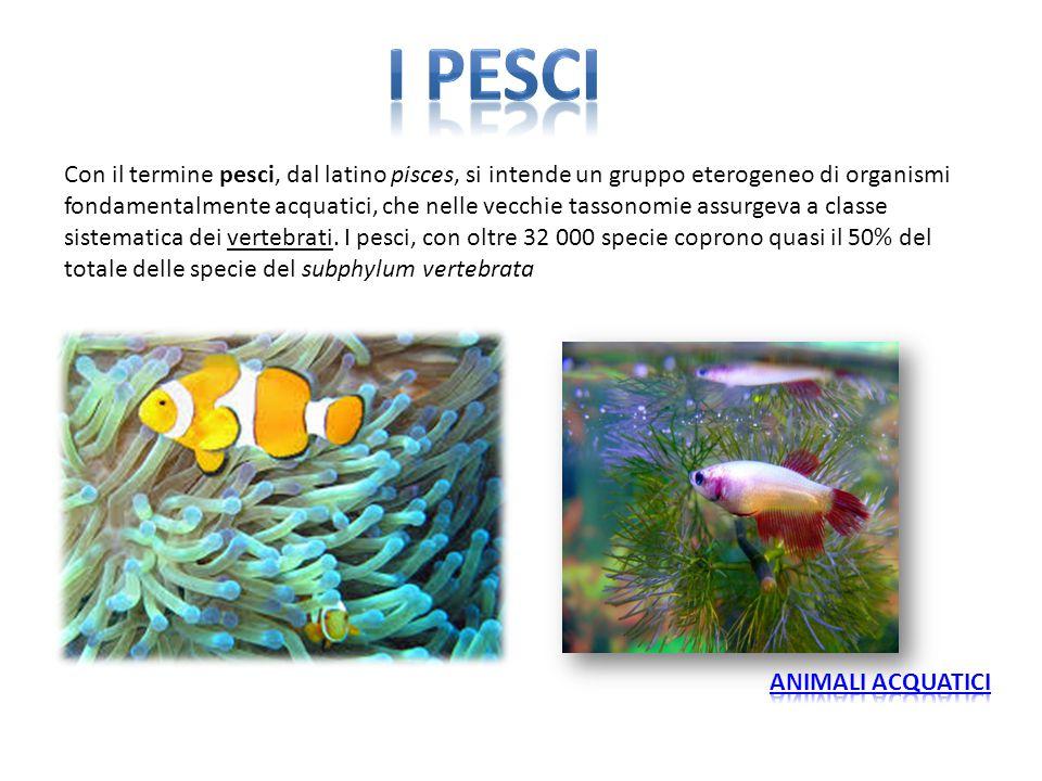Con il termine pesci, dal latino pisces, si intende un gruppo eterogeneo di organismi fondamentalmente acquatici, che nelle vecchie tassonomie assurge