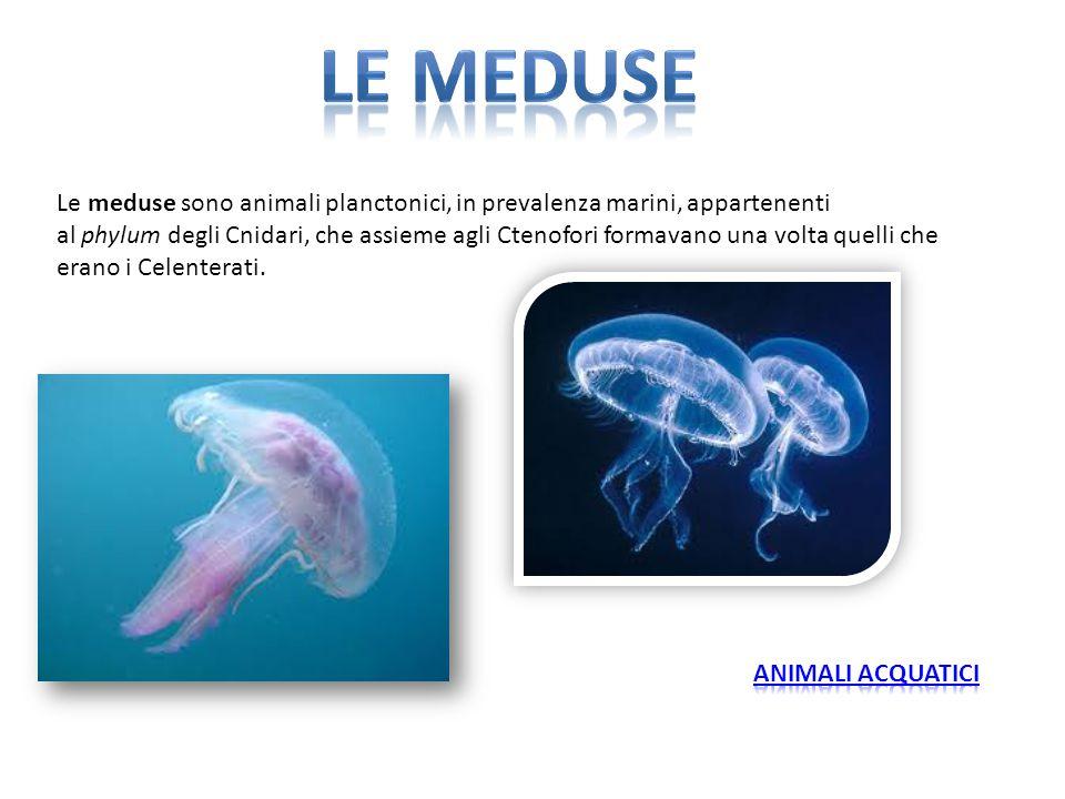 Le meduse sono animali planctonici, in prevalenza marini, appartenenti al phylum degli Cnidari, che assieme agli Ctenofori formavano una volta quelli