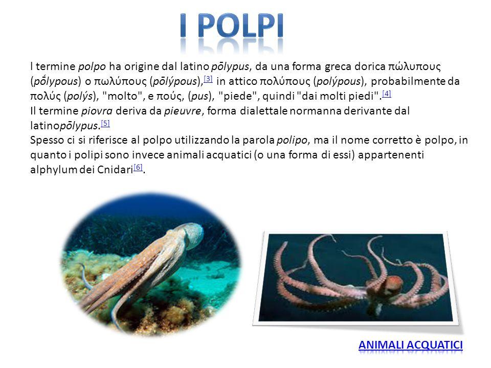 l termine polpo ha origine dal latino pōlypus, da una forma greca dorica πώλυπους (pṓlypous) o πωλύπους (pōlýpous), [3] in attico πολύπους (polýpous),