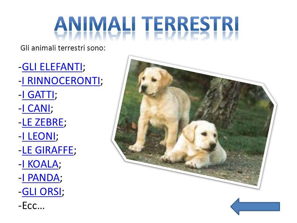 Gli animali terrestri sono: -GLI ELEFANTI;GLI ELEFANTI -I RINNOCERONTI;I RINNOCERONTI -I GATTI;I GATTI -I CANI;I CANI -LE ZEBRE;LE ZEBRE -I LEONI;I LE