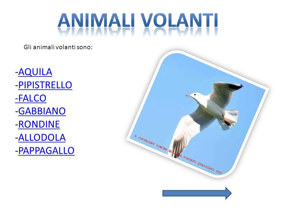 Gli animali volanti sono: -AQUILAAQUILA -PIPISTRELLOPIPISTRELLO -FALCO -GABBIANOGABBIANO -RONDINERONDINE -ALLODOLAALLODOLA -PAPPAGALLOPAPPAGALLO