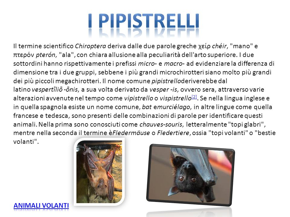 Il termine scientifico Chiroptera deriva dalle due parole greche χείρ chéir,