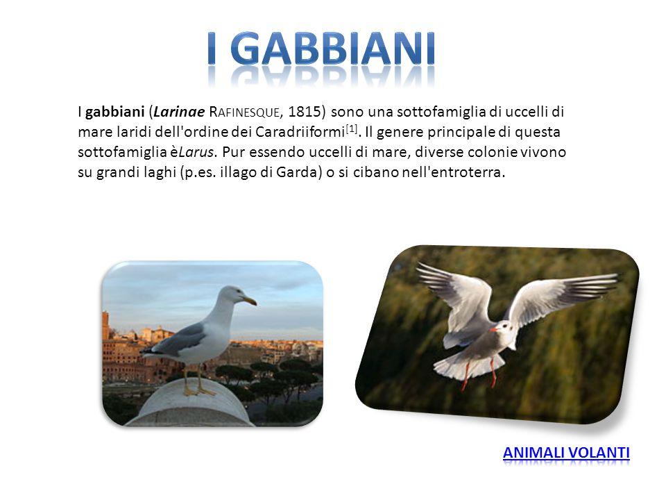 I gabbiani (Larinae R AFINESQUE, 1815) sono una sottofamiglia di uccelli di mare laridi dell'ordine dei Caradriiformi [1]. Il genere principale di que