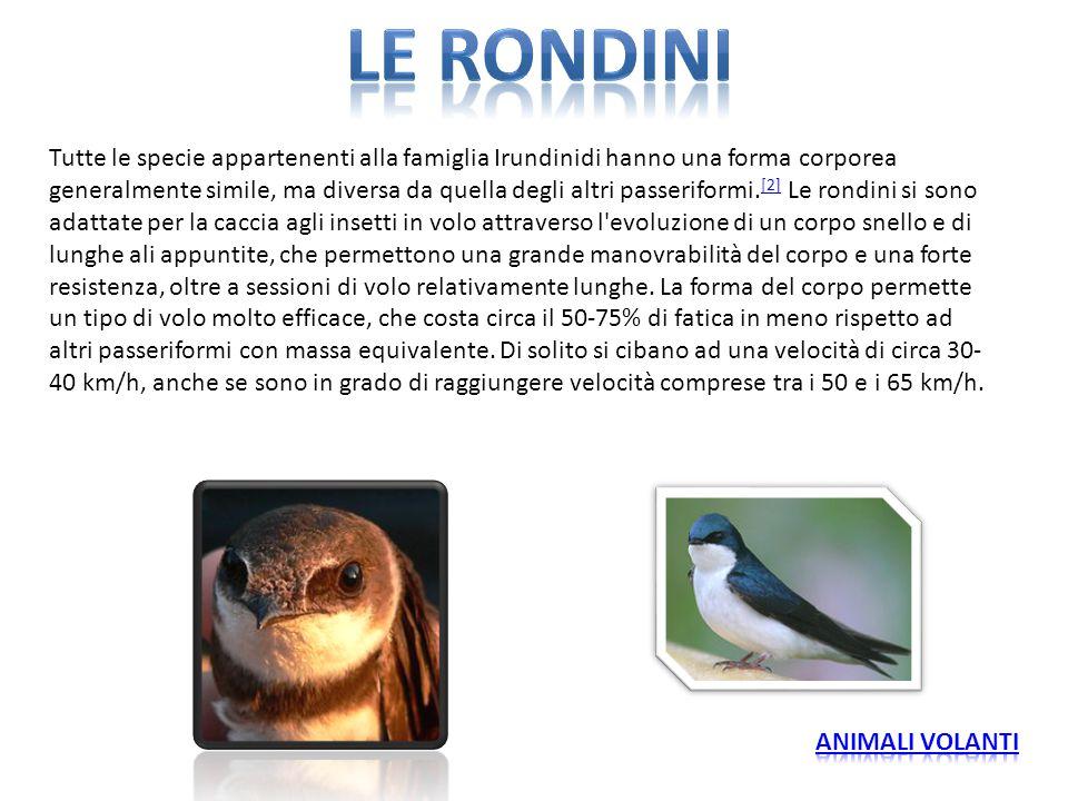 Tutte le specie appartenenti alla famiglia Irundinidi hanno una forma corporea generalmente simile, ma diversa da quella degli altri passeriformi. [2]