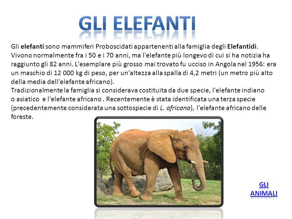 Gli elefanti sono mammiferi Proboscidati appartenenti alla famiglia degli Elefantidi. Vivono normalmente fra i 50 e i 70 anni, ma l'elefante più longe
