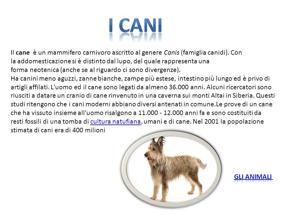 Il cane è un mammifero carnivoro ascritto al genere Canis (famiglia canidi). Con la addomesticazione si è distinto dal lupo, del quale rappresenta una
