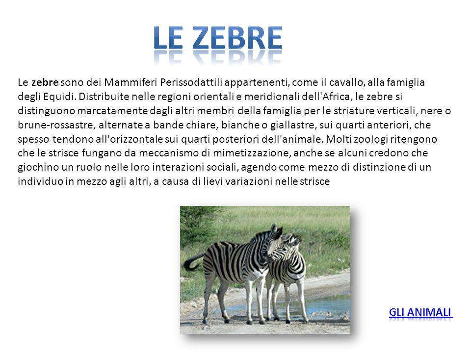 Le zebre sono dei Mammiferi Perissodattili appartenenti, come il cavallo, alla famiglia degli Equidi. Distribuite nelle regioni orientali e meridional