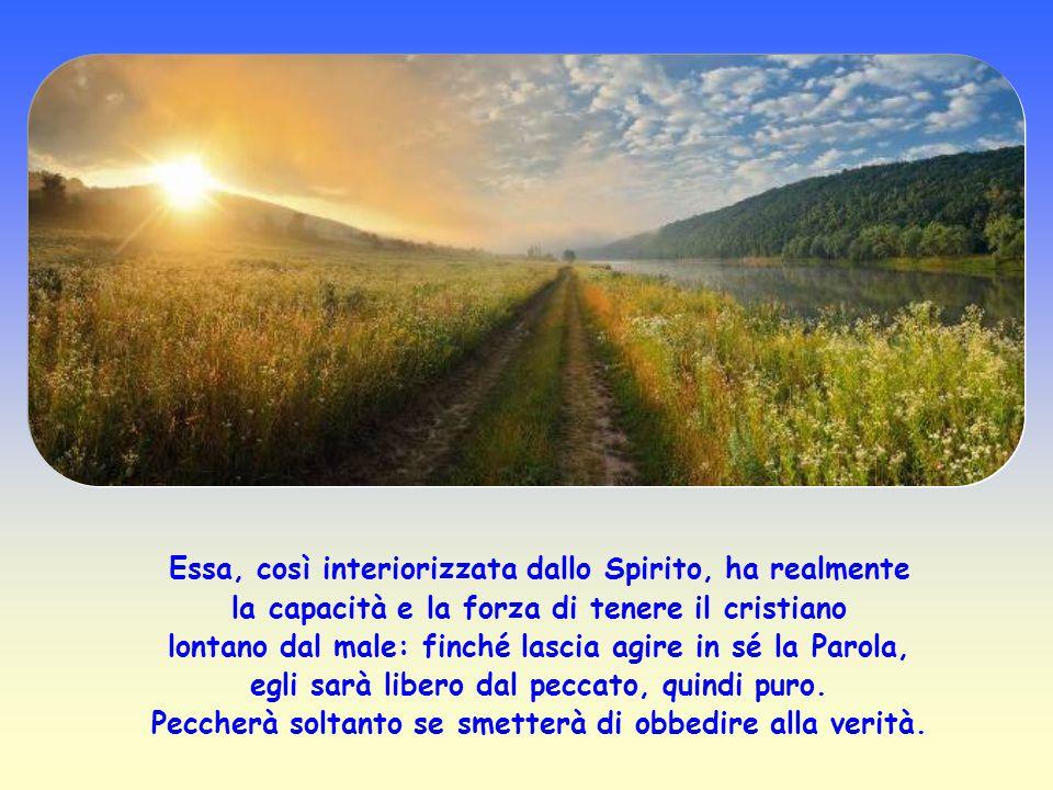 La Parola di Gesù viene paragonata anche ad un seme gettato nell'intimo del credente. Accolta, penetra nell'uomo e, come un seme, si sviluppa, cresce,