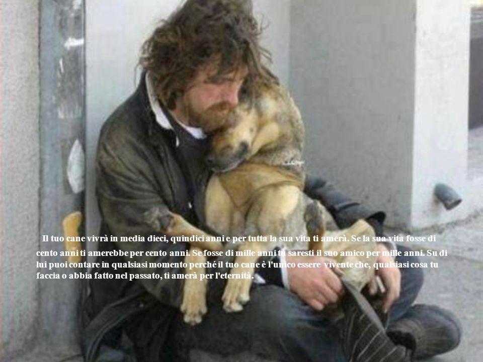 Il tuo cane vivrà in media dieci, quindici anni e per tutta la sua vita ti amerà. Se la sua vita fosse di cento anni ti amerebbe per cento anni. Se fo
