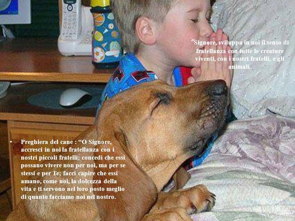 """"""" Signore, sviluppa in noi il senso di fratellanza con tutte le creature viventi, con i nostri fratelli, e gli animali. Preghiera del cane : """"O Signor"""