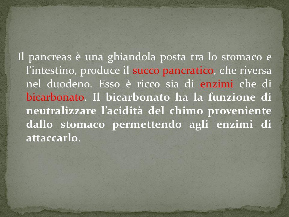Il pancreas è una ghiandola posta tra lo stomaco e l'intestino, produce il succo pancratico, che riversa nel duodeno. Esso è ricco sia di enzimi che d