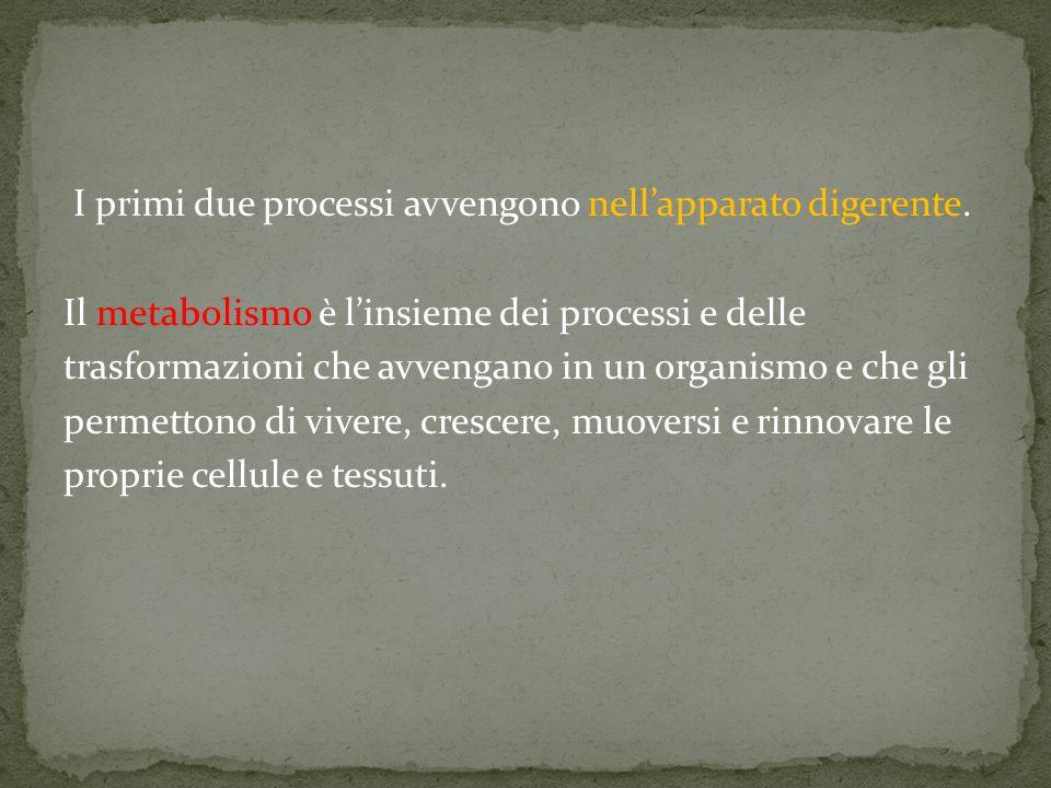 I primi due processi avvengono nell'apparato digerente. Il metabolismo è l'insieme dei processi e delle trasformazioni che avvengano in un organismo e