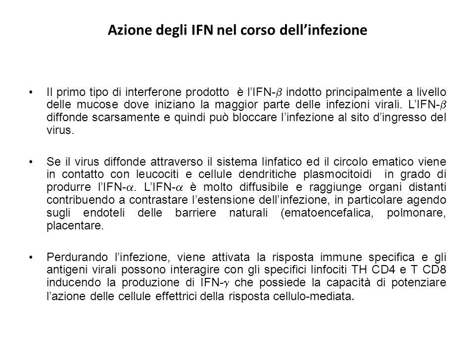 Azione degli IFN nel corso dell'infezione Il primo tipo di interferone prodotto è l'IFN-  indotto principalmente a livello delle mucose dove iniziano