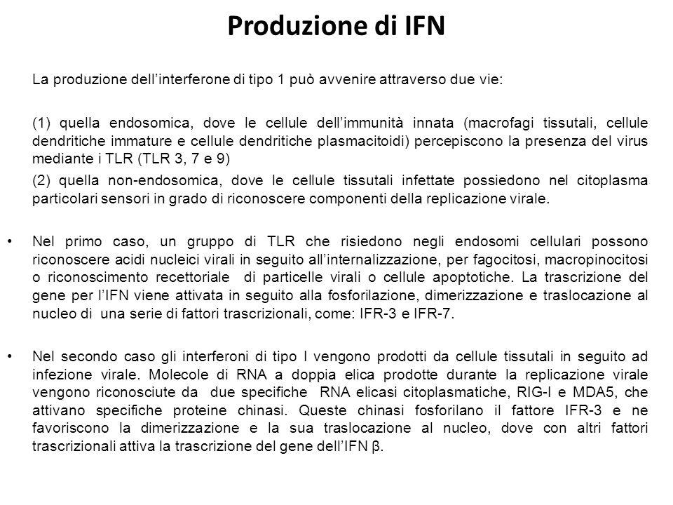 Produzione di IFN La produzione dell'interferone di tipo 1 può avvenire attraverso due vie: (1) quella endosomica, dove le cellule dell'immunità innat