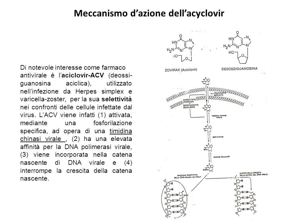 Meccanismo d'azione dell'acyclovir Di notevole interesse come farmaco antivirale è l'aciclovir-ACV (deossi- guanosina aciclica), utilizzato nell'infez