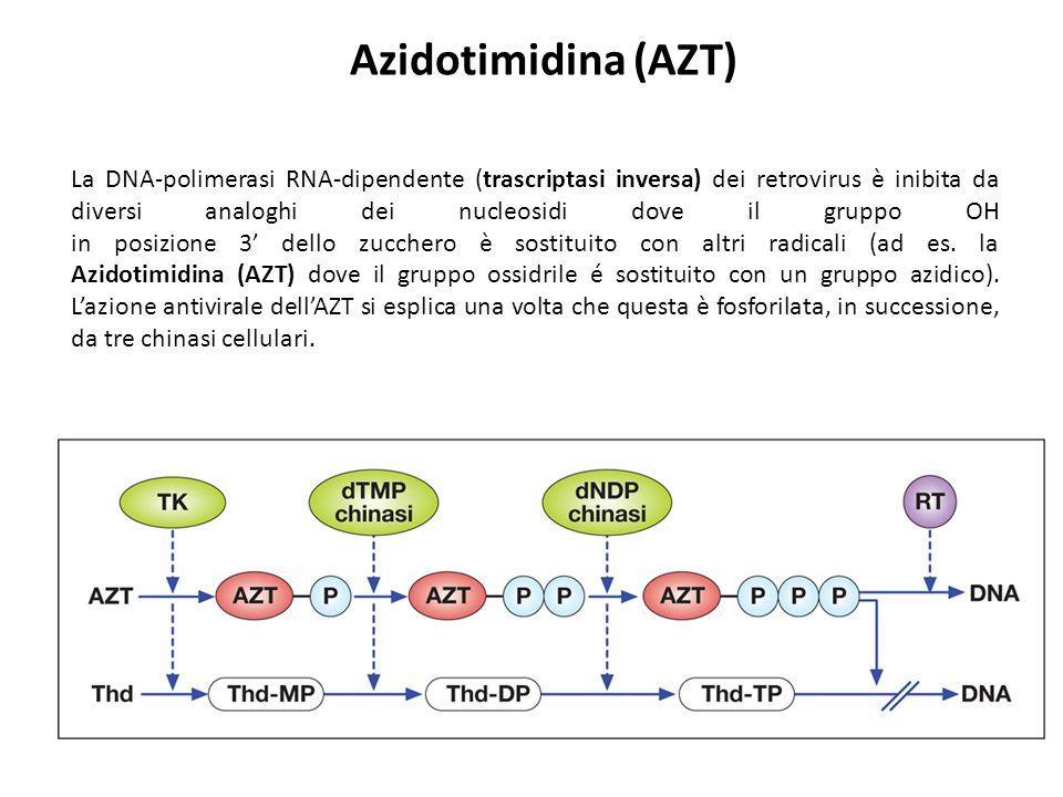 La DNA-polimerasi RNA-dipendente (trascriptasi inversa) dei retrovirus è inibita da diversi analoghi dei nucleosidi dove il gruppo OH in posizione 3'