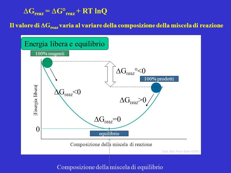 Energia libera e equilibrio 100% reagenti 100% prodotti equilibrio Composizione della miscela di reazione |Energia libera|  G reaz °<0 0 Composizione