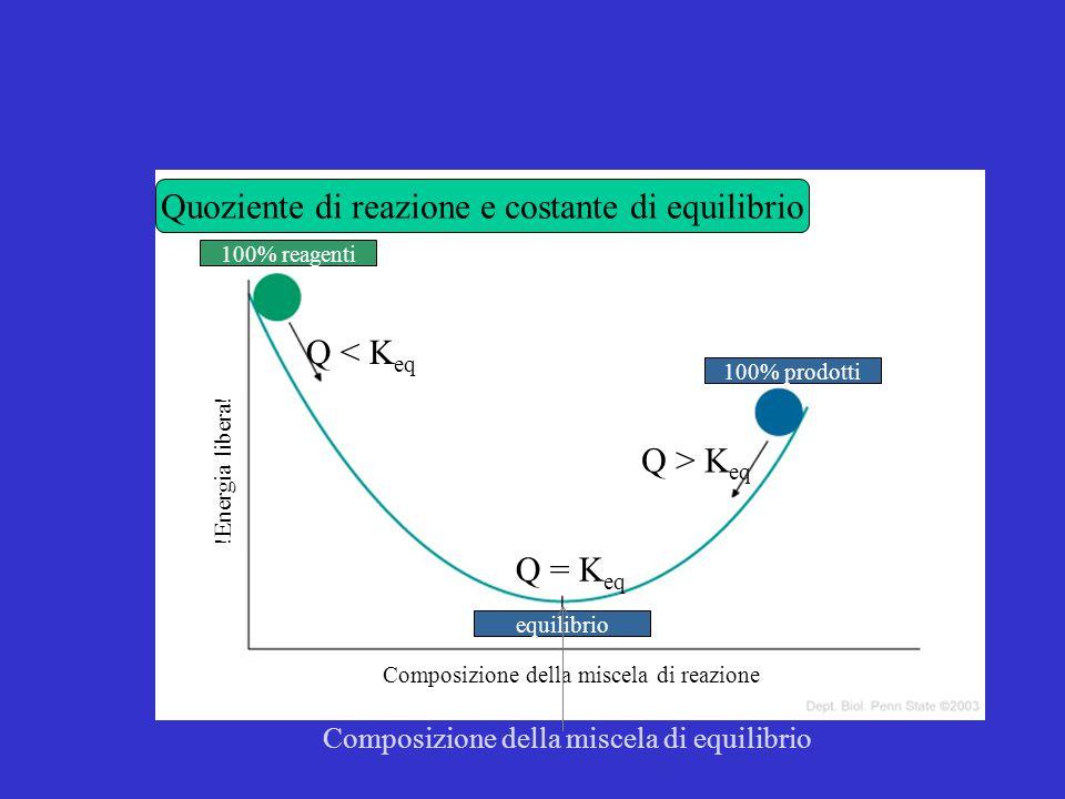 Energia libera e costante di equilibrio  G reaz =  G° reaz + RT lnQ All'equilibrio:  G reaz = 0  G° reaz = -RT lnK eq