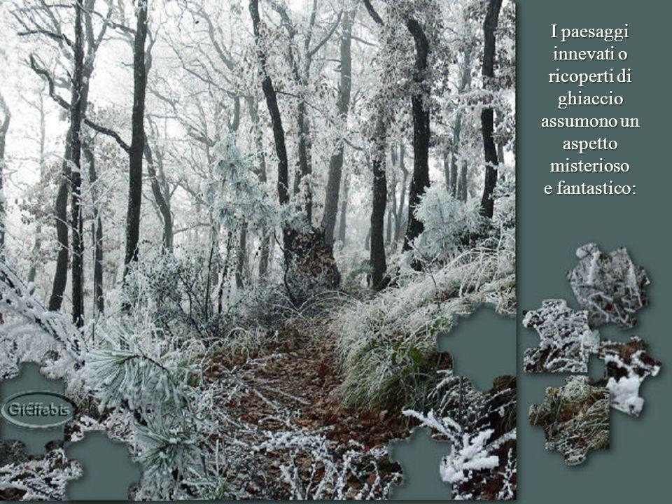 In questo mese, come ogni anno, i rigori dell'inverno si fanno sentire.