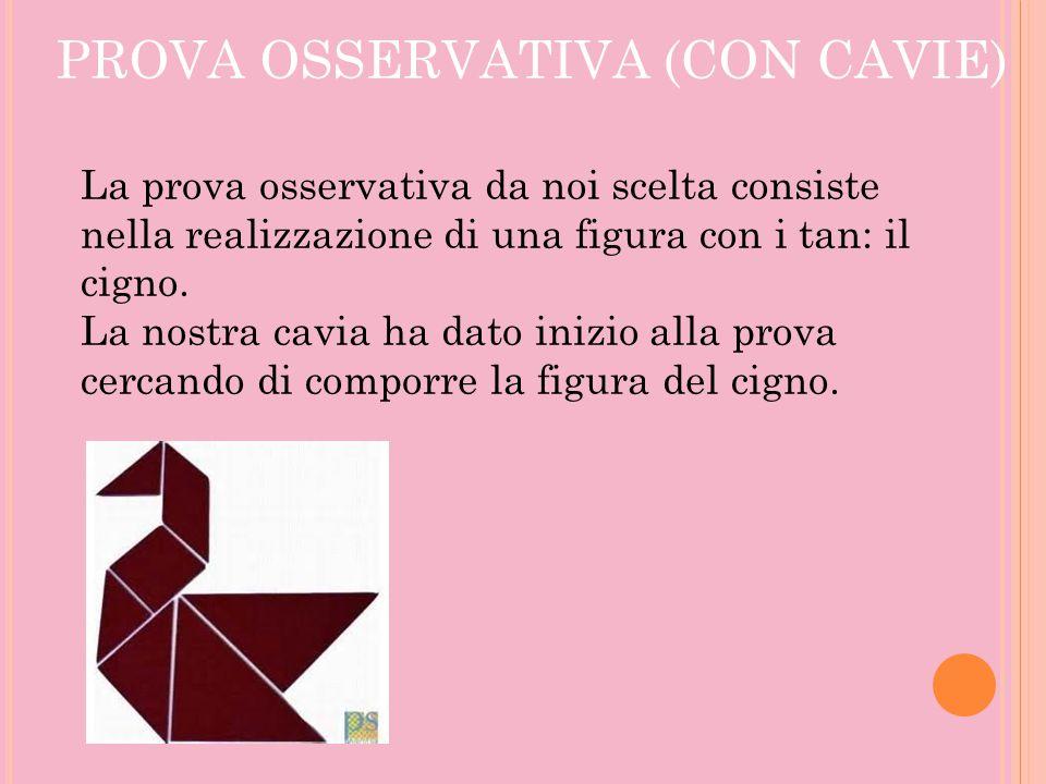 PROVA OSSERVATIVA (CON CAVIE) La prova osservativa da noi scelta consiste nella realizzazione di una figura con i tan: il cigno. La nostra cavia ha da