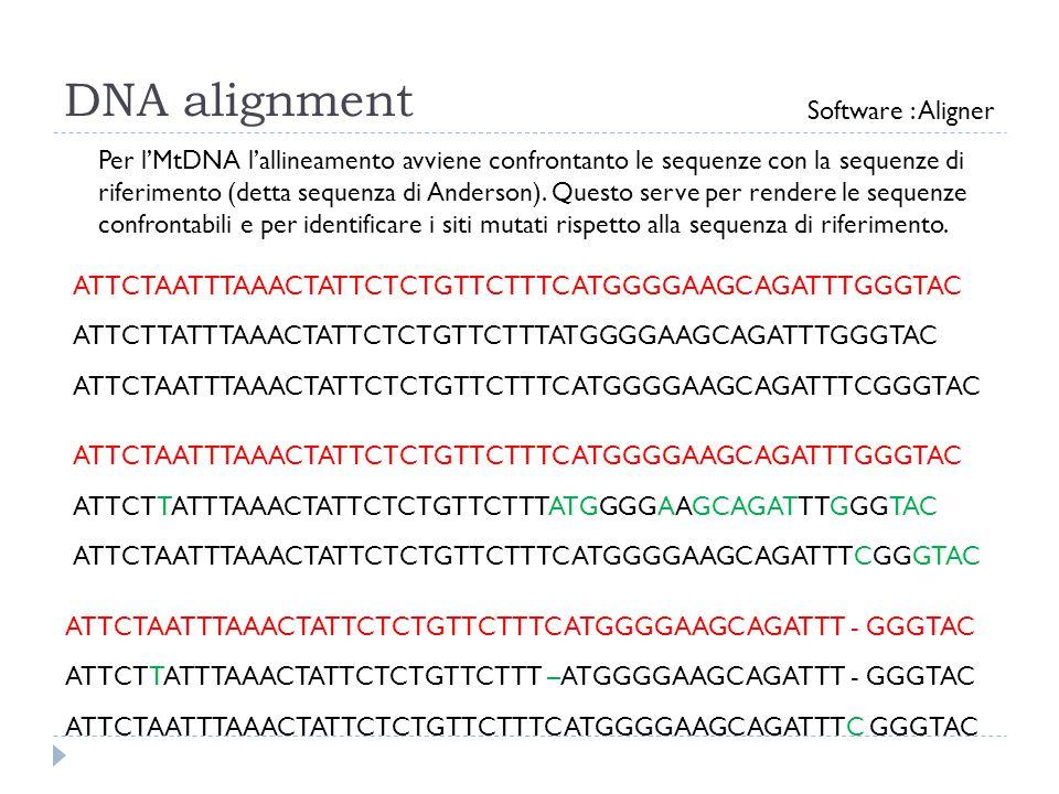 DNA alignment Per l'MtDNA l'allineamento avviene confrontanto le sequenze con la sequenze di riferimento (detta sequenza di Anderson). Questo serve pe