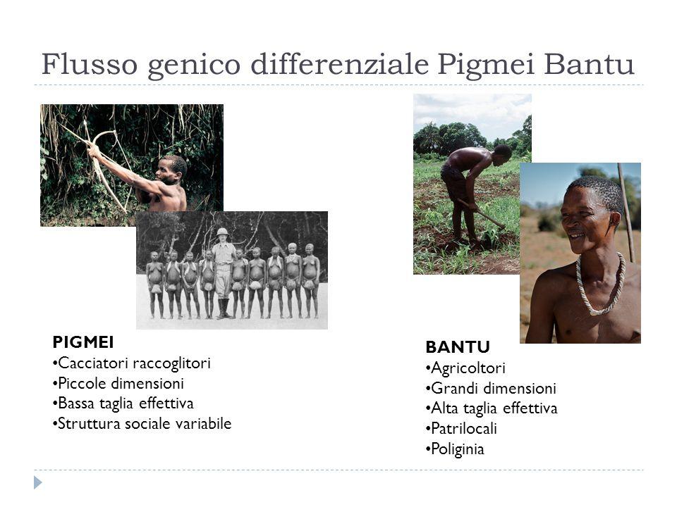 Flusso genico differenziale Pigmei Bantu PIGMEI Cacciatori raccoglitori Piccole dimensioni Bassa taglia effettiva Struttura sociale variabile BANTU Ag