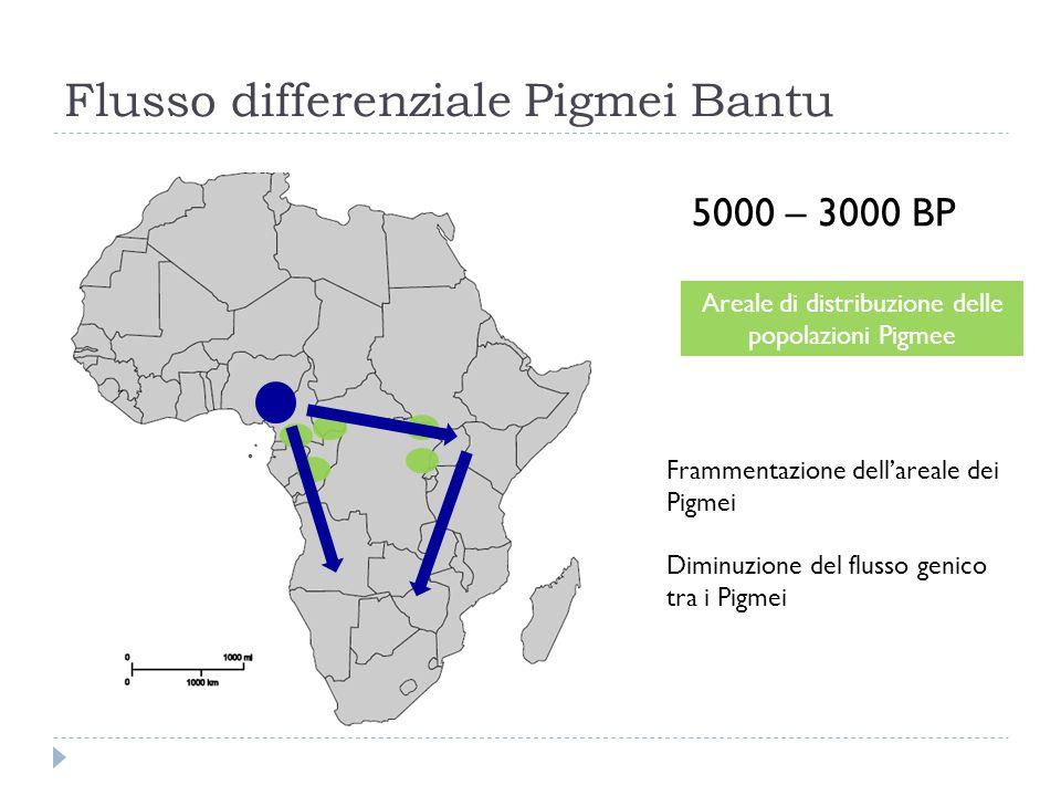 Flusso differenziale Pigmei Bantu 5000 – 3000 BP Areale di distribuzione delle popolazioni Pigmee Frammentazione dell'areale dei Pigmei Diminuzione de