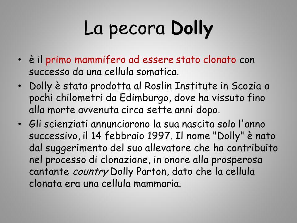 La pecora Dolly è il primo mammifero ad essere stato clonato con successo da una cellula somatica. Dolly è stata prodotta al Roslin Institute in Scozi