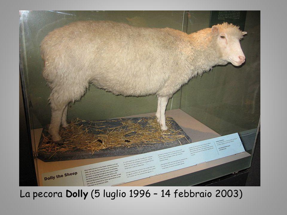 La pecora Dolly (5 luglio 1996 – 14 febbraio 2003)