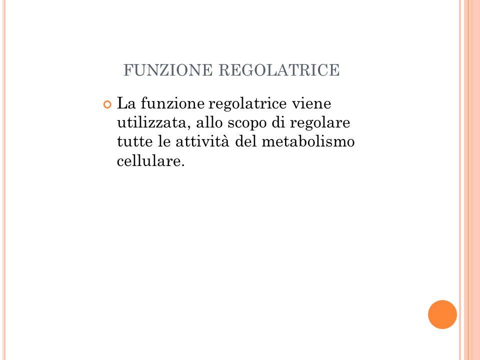 FUNZIONE REGOLATRICE La funzione regolatrice viene utilizzata, allo scopo di regolare tutte le attività del metabolismo cellulare.