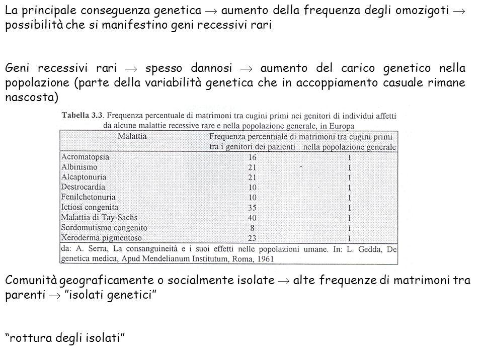 La principale conseguenza genetica  aumento della frequenza degli omozigoti  possibilità che si manifestino geni recessivi rari Geni recessivi rari