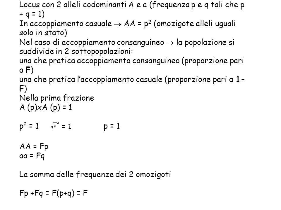 Locus con 2 alleli codominanti A e a (frequenza p e q tali che p + q = 1) In accoppiamento casuale  AA = p 2 (omozigote alleli uguali solo in stato)