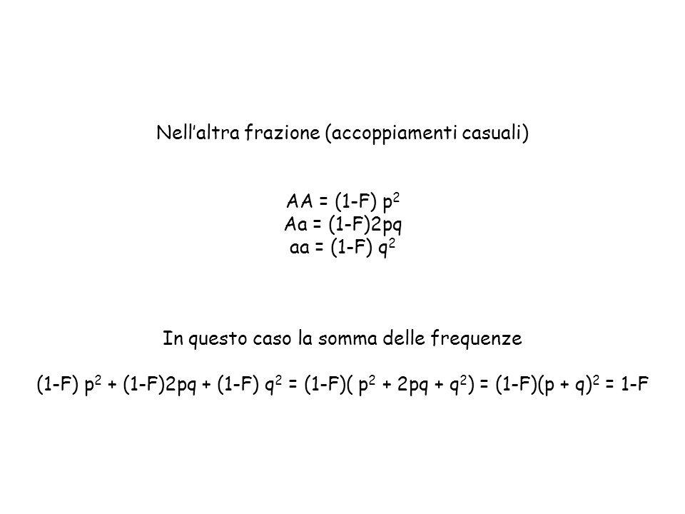 Nell'altra frazione (accoppiamenti casuali) AA = (1-F) p 2 Aa = (1-F)2pq aa = (1-F) q 2 In questo caso la somma delle frequenze (1-F) p 2 + (1-F)2pq +