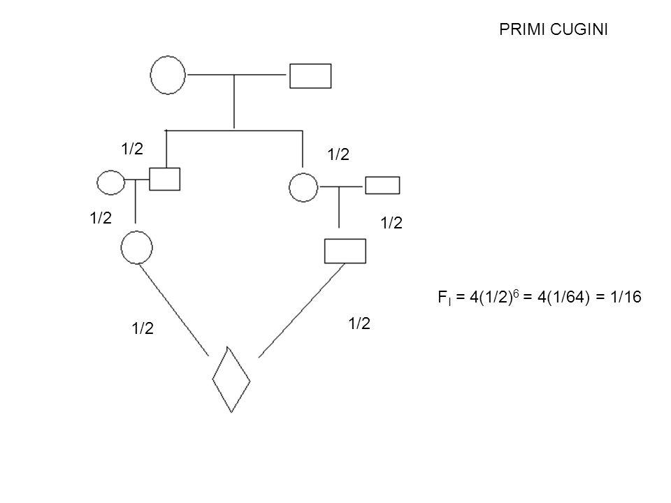 PRIMI CUGINI 1/2 F I = 4(1/2) 6 = 4(1/64) = 1/16