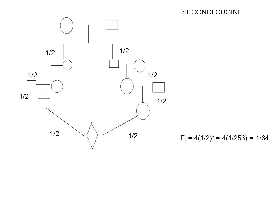 SECONDI CUGINI 1/2 F I = 4(1/2) 8 = 4(1/256) = 1/64