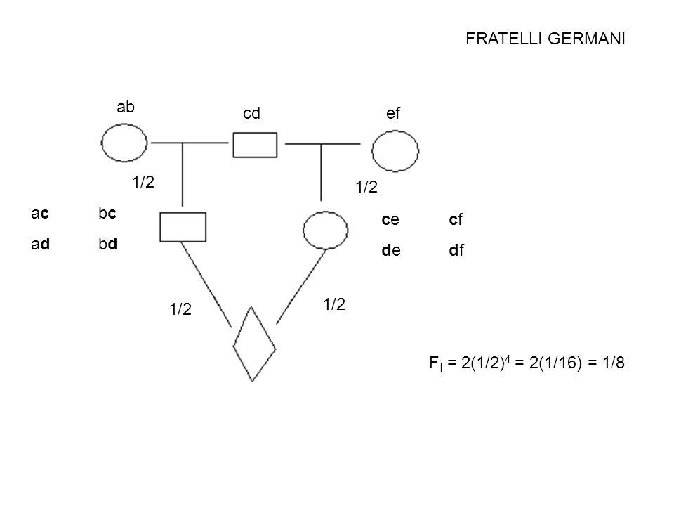 FRATELLI GERMANI F I = 2(1/2) 4 = 2(1/16) = 1/8 ab cdef acbcadbdacbcadbd cecfdedfcecfdedf