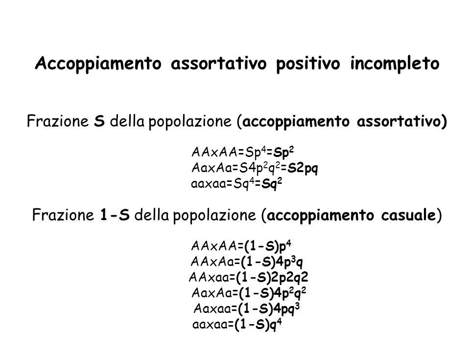 Accoppiamento assortativo positivo incompleto Frazione S della popolazione (accoppiamento assortativo) AAxAA=Sp 4 =Sp 2 AaxAa=S4p 2 q 2 =S2pq aaxaa=Sq