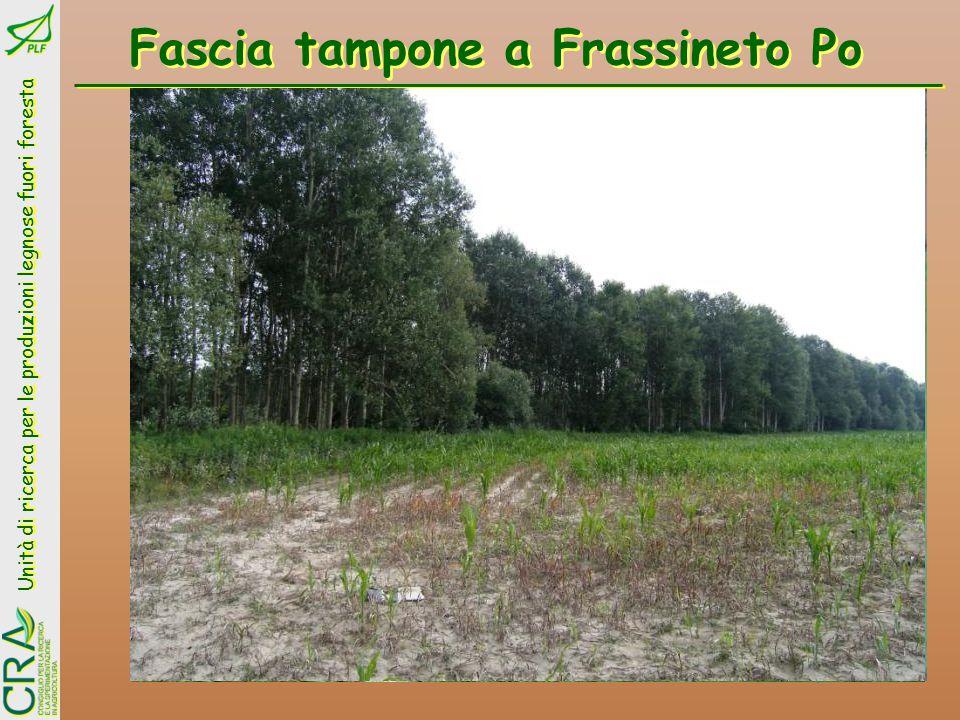 Unità di ricerca per le produzioni legnose fuori foresta Fitorimedio a Rocca Massima